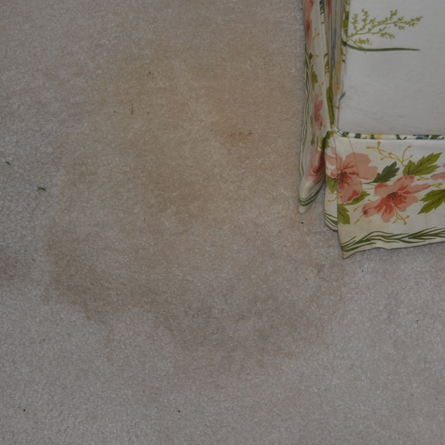 dry carpet cleaning - pet stain before