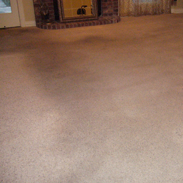 dry carpet cleaning - carpet cleaning - dry organic carpet cleaning power before